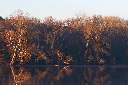 bronzed shoreline