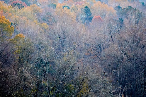 autumn mists above Haw River