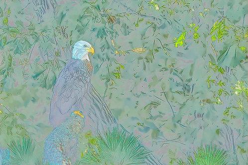 almost crayon bald eagle