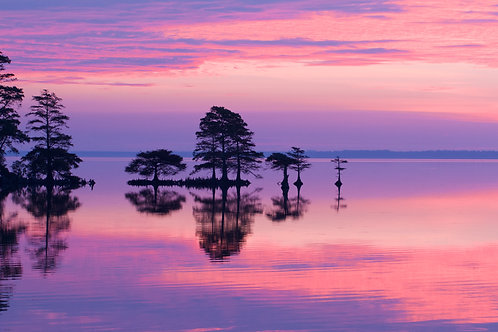 purple and pink sunrise