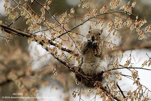 squirrel munch