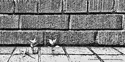 IMG_3180 b and w brick wall 2.jpg