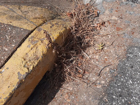 The Weeds In The Sidewalk ~ or~ Why We Can't Have Nice Things in Okmulgee