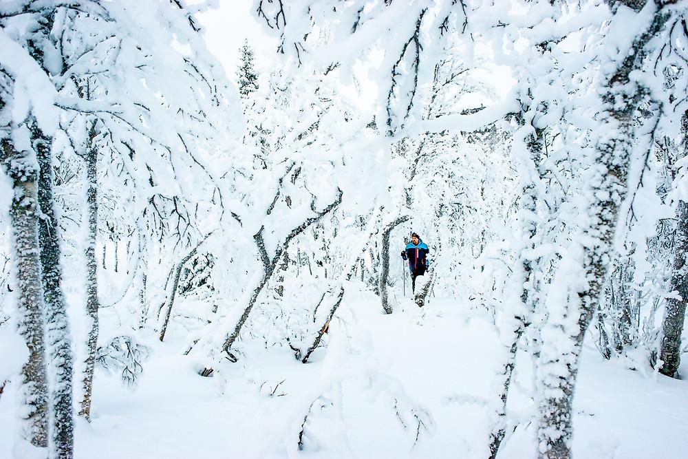 Turåkning i Ullådalen. Skidåkare, turåkare, skidor, turåkning