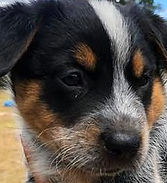 puppy #4_edited.jpg