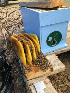 Bee Nucs