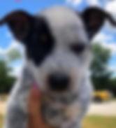puppy #2_edited.jpg
