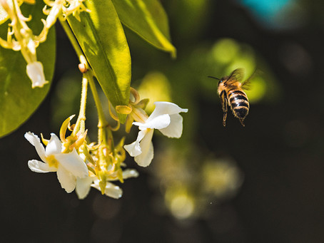 15 Honeybee Facts You'd Never Guess