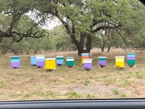 Jackass Honey Farms