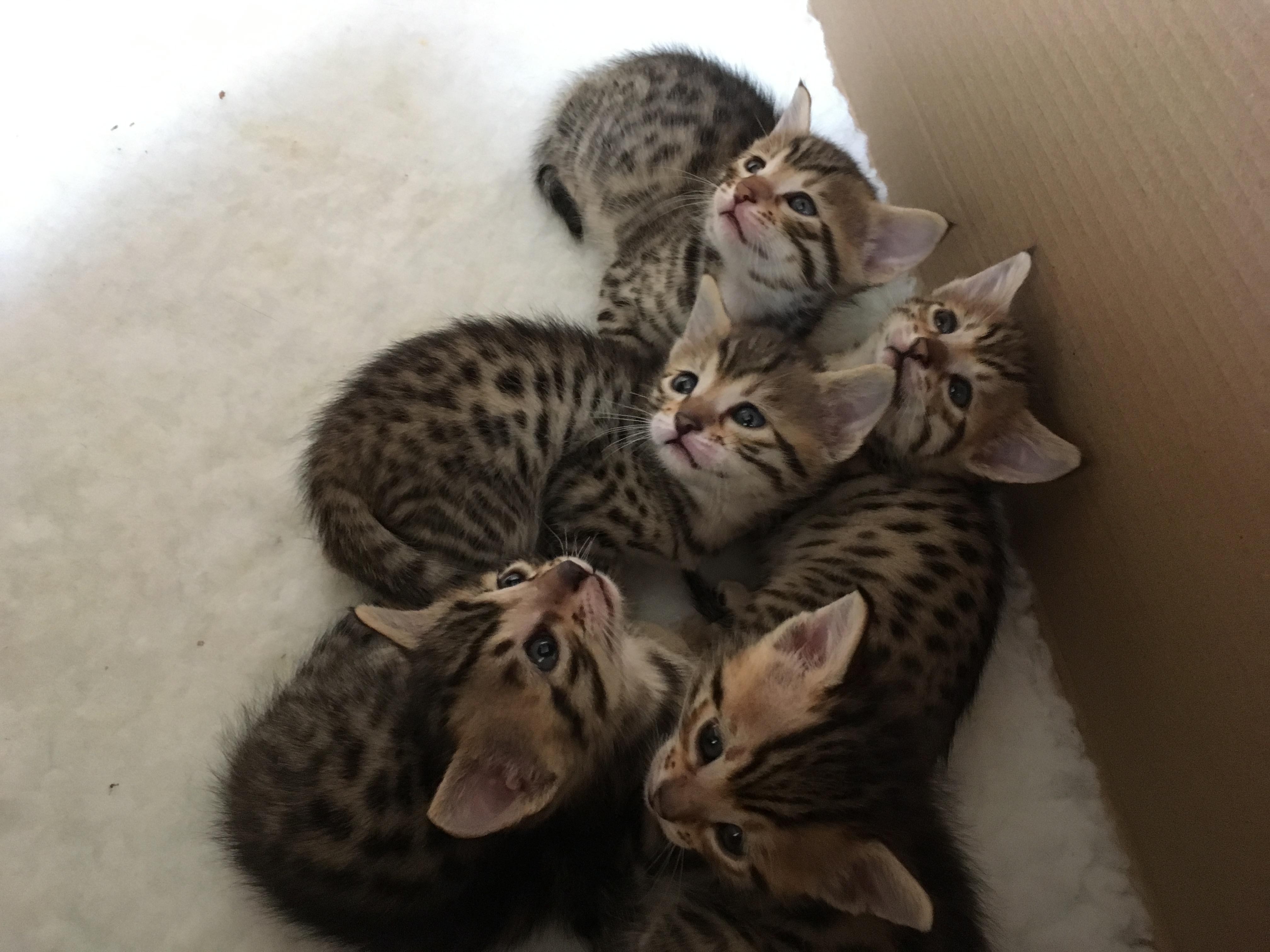 Nebula_kitten3