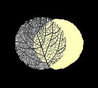 feuille noire + cercle plein jaune pale.