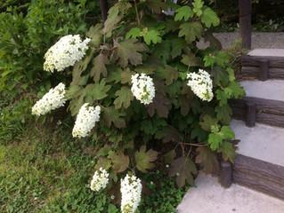 名もなき池(モネの池)の花たち