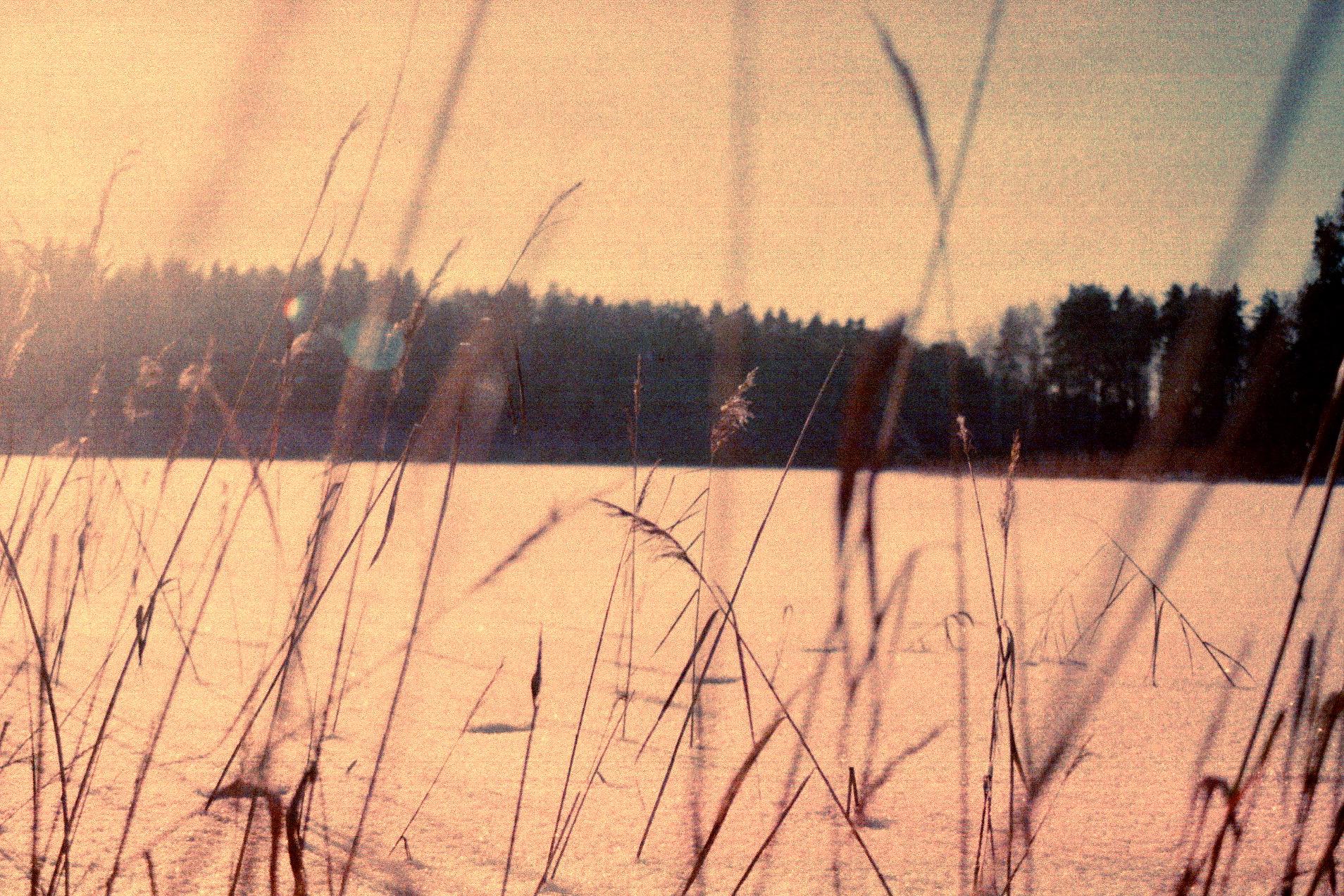 Where live dead grass
