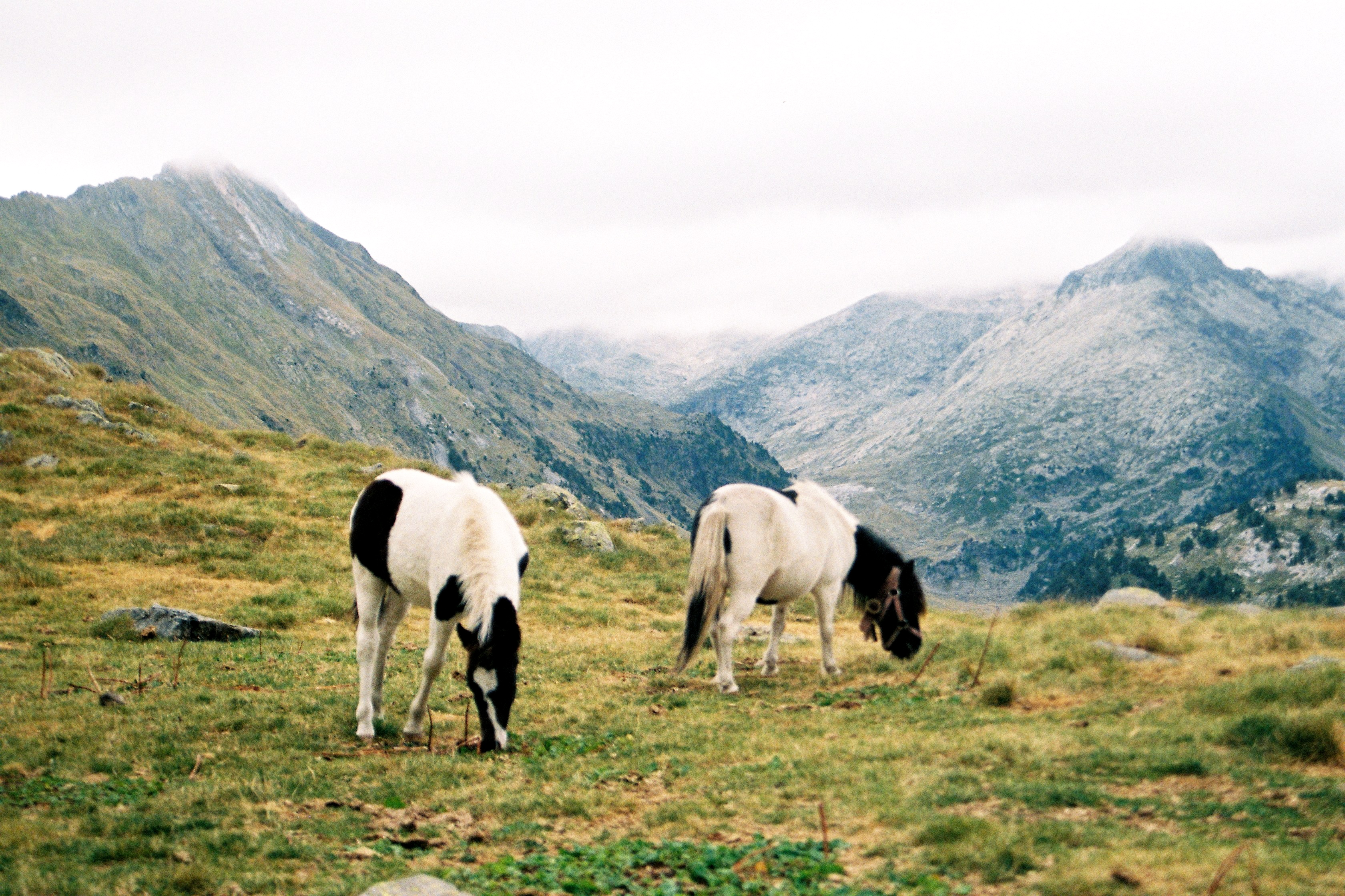 Mountains and wild horses