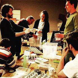 Workshop med spiselige insekter