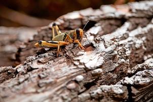 Spiselige insekter i Børsen