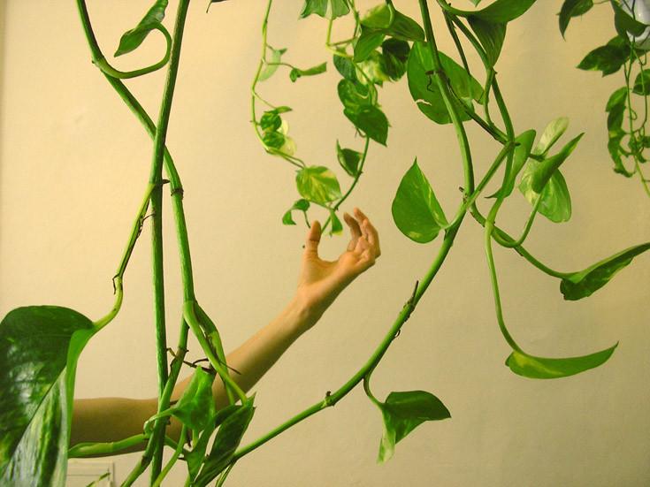 """Visio-conférence """"Le végétal dans l'art"""" Samedi 13 mars à 11h"""
