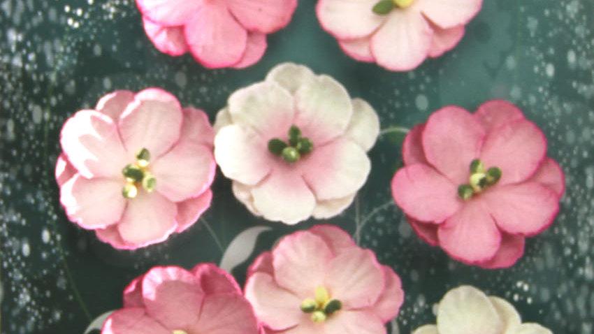 Green Tara Cherry Blossoms  Rose 10 pieces