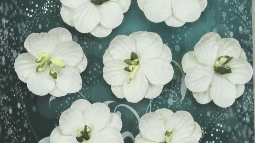 Green Tara Cherry  Blossoms     white 10 pieces