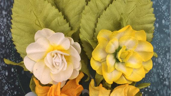 Green Tara   6 x Tea   Roses  Yellow