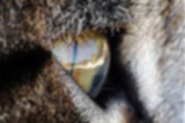 ojo de gato.jpg