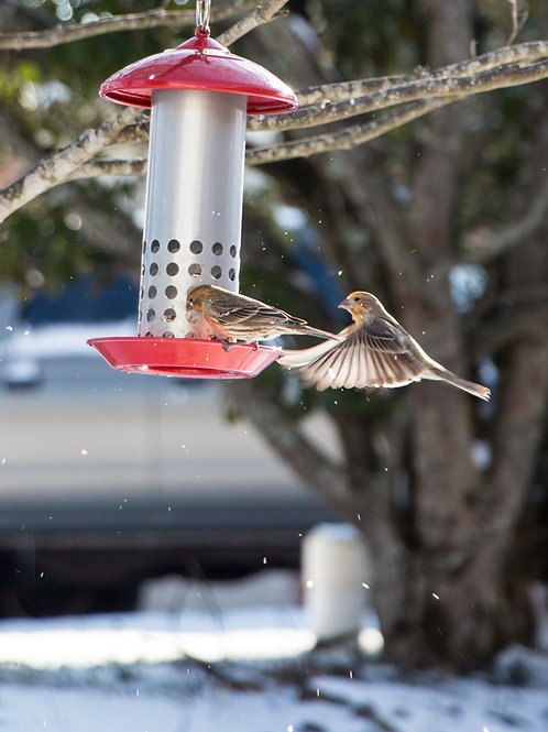 Snow Bird Collection: Flying Finches