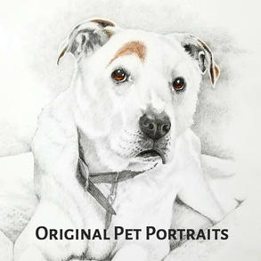 Original Pet Portraits