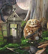 Boobook Owl web copy.jpg