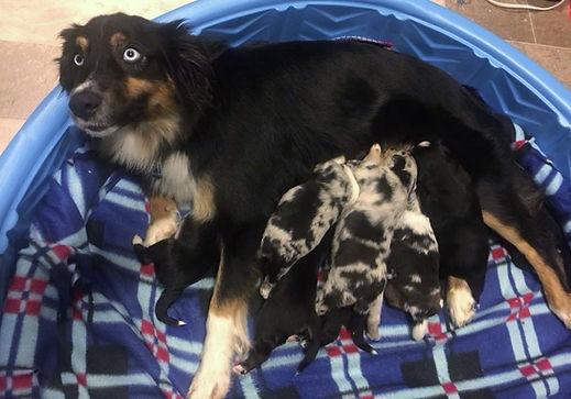 Skylar & Puppies.jpg