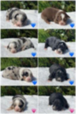 puppies 2 weeks.jpg