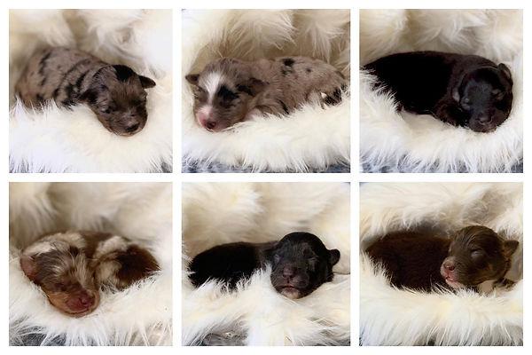 Puppies 1 week .jpg