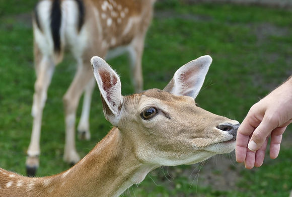 fauna salvaje veterinario