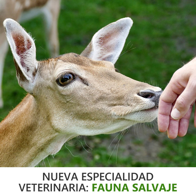 VETERINARIO ESPECIALISTA EN FAUNA SALVAJE