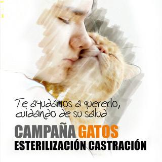 Campaña esterilización gatos
