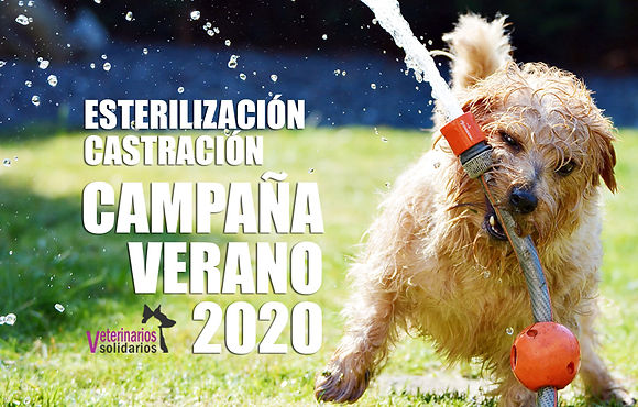 Campaña esterización castración perros y gatos