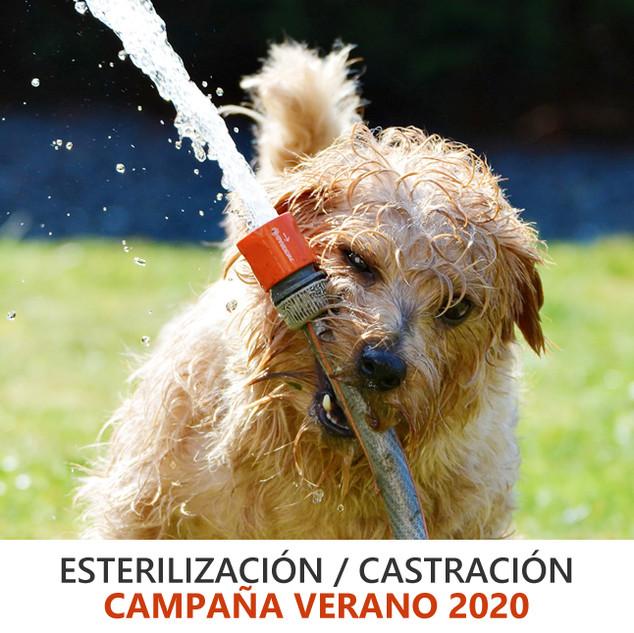 CAMPAÑA ESTERILIZACIÓN CASTRACIÓN
