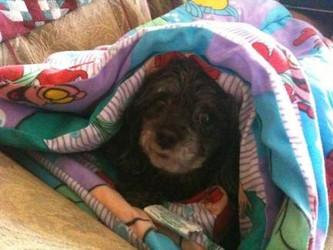 ¡Llega el frío! ¡Recogemos mantas!