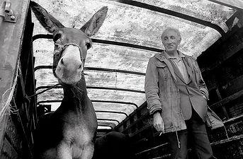 Des Clinton: Muff Horse Fair