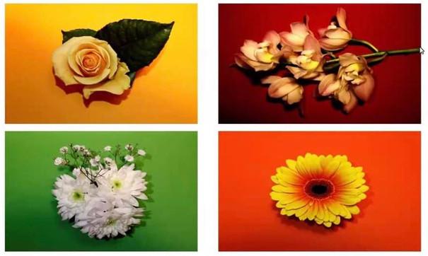 Martine Healy: Photo Collage # 1