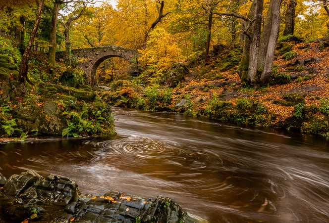 Tom O'Doherty: Autumn in Tollymore
