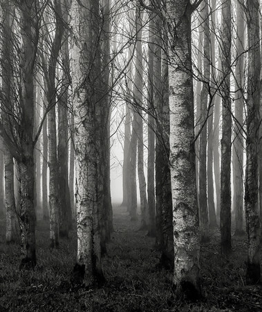 Declan Conaghan: The Misty Wood