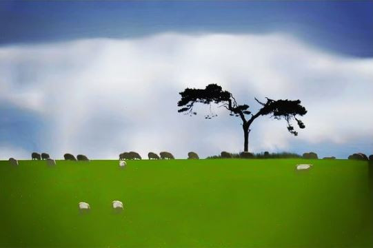 Cath Thomas: Minimalist Landscape - Fairy Tree