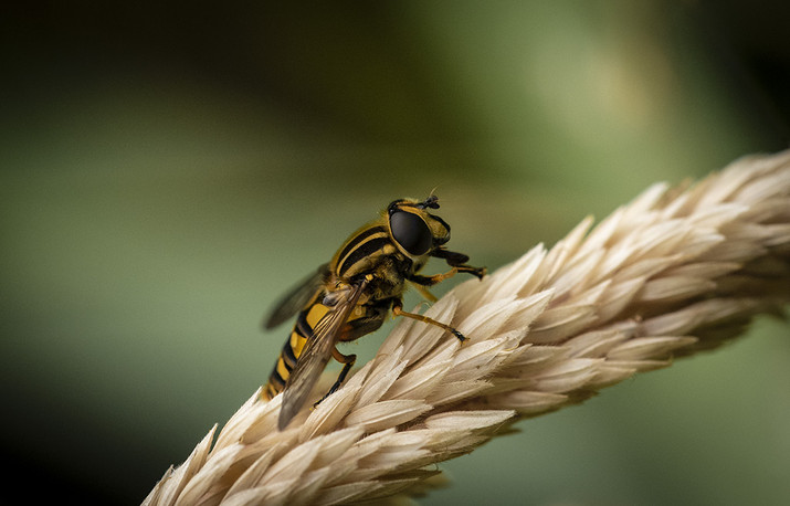 Vincent Doyle: Hoverfly