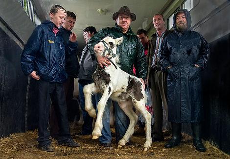 Foal in Trailer