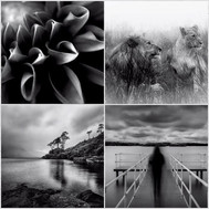 Drogheda Photographic Club Members: Photo Collage # 1