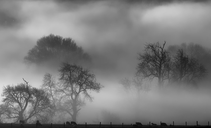 Declan Conaghan: A Misty Morning