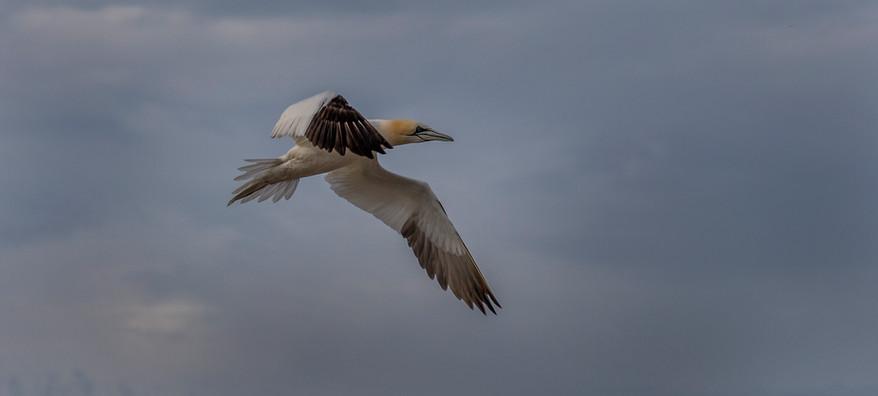 Pat Burke: Flying High