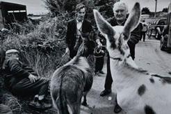 Mick Feeney: Muff Horse Fair