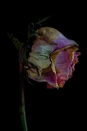 Siobhan Black: Impermanence
