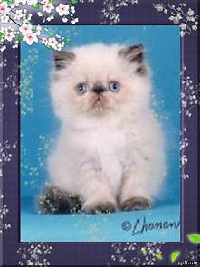 Baby seal cherry frame.jpg
